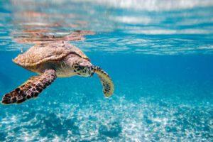 Canvapro Foto mit dem Meer und einer Schildkröte